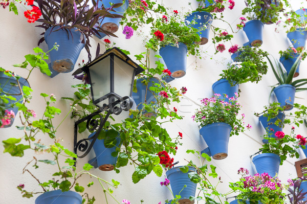 Blue Flowerpots and Flowers on a white wall with vintage lantern Stock photo © Taiga