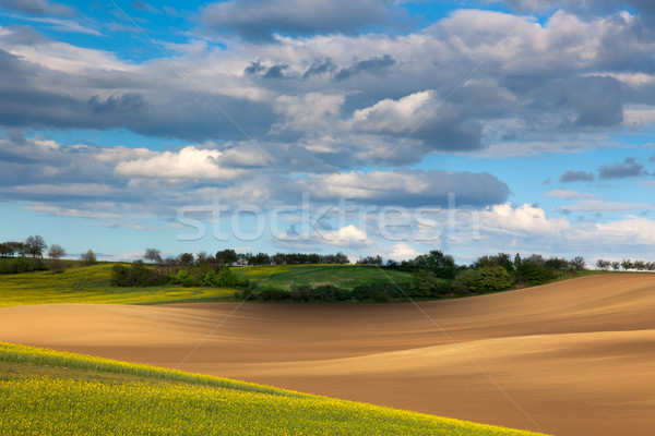 beautiful valley - colorful land and flowering field overlooking Stock photo © Taiga
