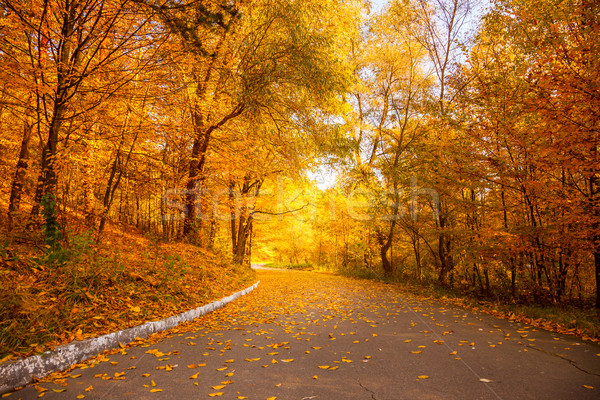 Gold Autumn in the city park -  Yellow Trees and alley Stock photo © Taiga