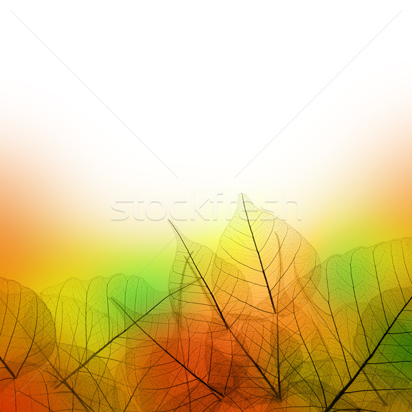 Levelek keret őszi idény fehér színes terv Stock fotó © Taiga