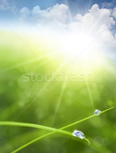 Сток-фото: Эко · небе · трава · капли · воды · облаке · отражение