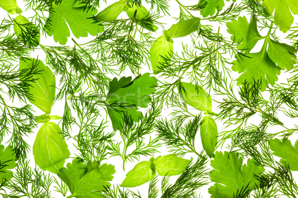 Fresh Basil, Parsley and Dill / background / isolated on white / Stock photo © Taiga