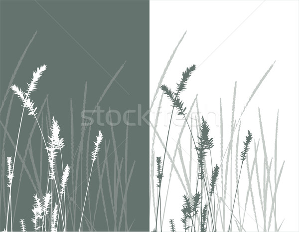 Stock photo: real grass  silhouette / vector