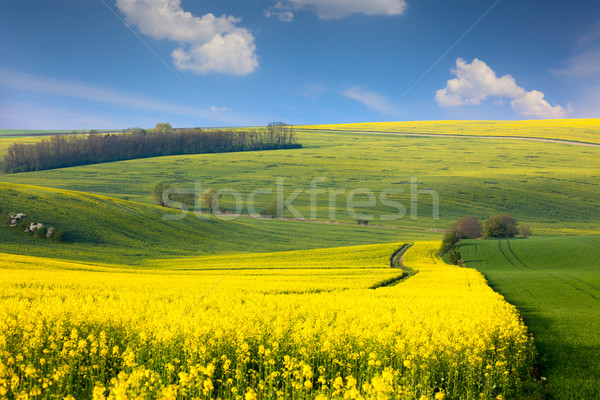 Panoramic landscape of colorful  hills with  blue sky and clouds Stock photo © Taiga