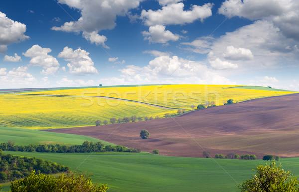 Stockfoto: Prachtig · landschap · velden · kleurrijk · heuvels · groot