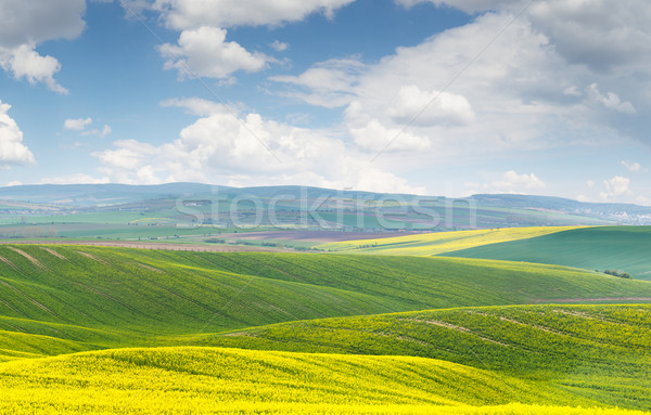 Beautiful landscape, yellow-green-blue colors of nature, sunny d Stock photo © Taiga