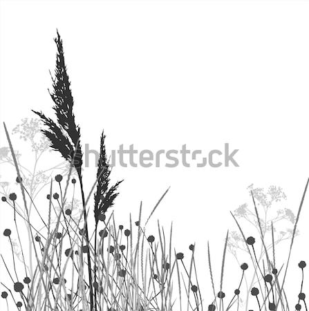 Grass silhouettes / vector / elements are separated Stock photo © Taiga