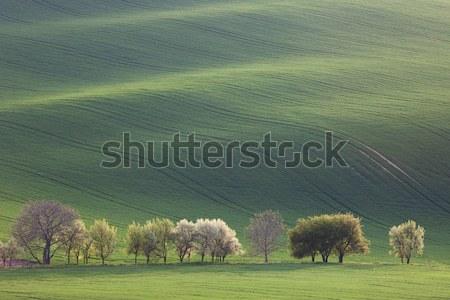 ミニマリズム すごい 風景 季節の 壁紙 緑 ストックフォト © Taiga