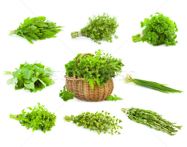Big Set of Bunches and Basket  of fresh Spice Herbs /  isolated  Stock photo © Taiga