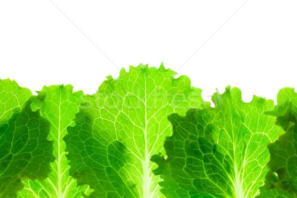 Friss saláta keret levelek izolált fehér Stock fotó © Taiga