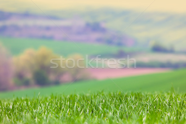 Blured Landscape background - focus on the front grass Stock photo © Taiga