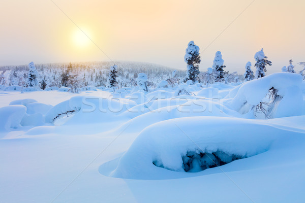Polar Sunny Winter Landscape -  sparkling snow and big snowbanks Stock photo © Taiga