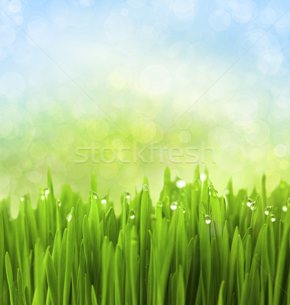 Green Grass with Water Drops on Abstract Bokeh Background Stock photo © Taiga