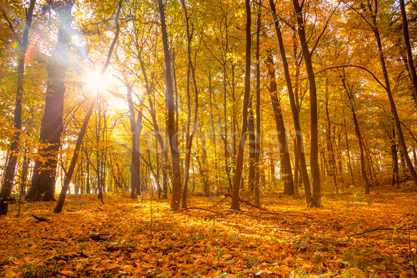 Morning in the Silent  Autumn park with sunlight and sunbeams -  Stock photo © Taiga