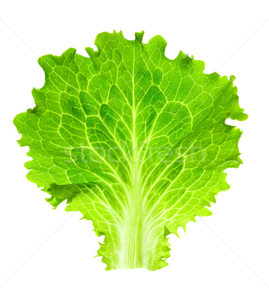 Fresh Lettuce / one leaf isolated on white background / close-up Stock photo © Taiga