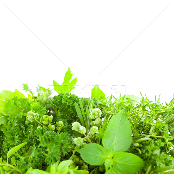 Border of Different  Fresh Spice Herbs  isolated  Stock photo © Taiga