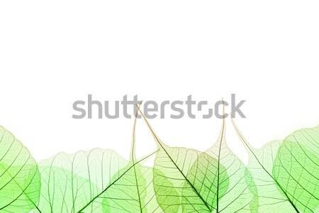 Stockfoto: Grens · groene · bladeren · witte · natuurlijke · cel · structuur