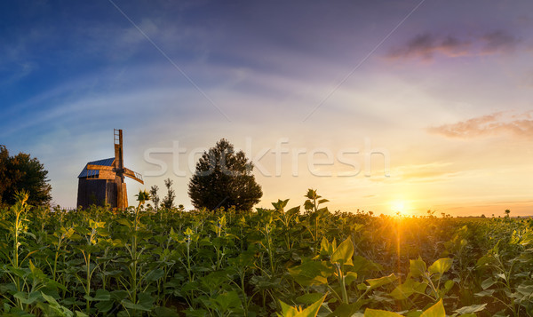 Landscape of an old wooden mill in a field at colorful sunset ti Stock photo © Taiga