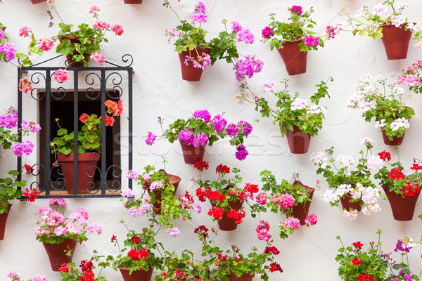 Beautiful Window and Wall Decorated Flowers - Old European Town, Stock photo © Taiga