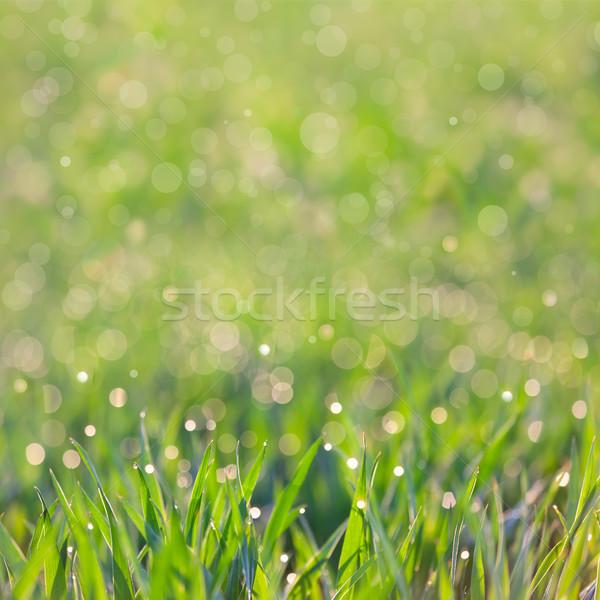 Friss fű cseppek harmat elképesztő bokeh Stock fotó © Taiga
