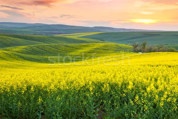 Amazing spring fresh landscape of colorful fields Stock photo © Taiga