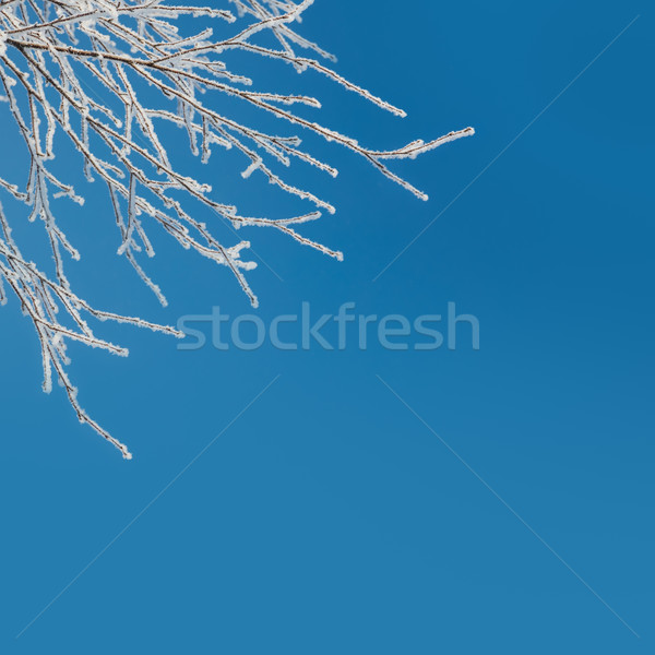 Abstract Winter Background - snow covered icy white branches  Stock photo © Taiga
