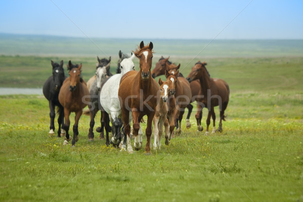 Horses Running Stock photo © Taiga