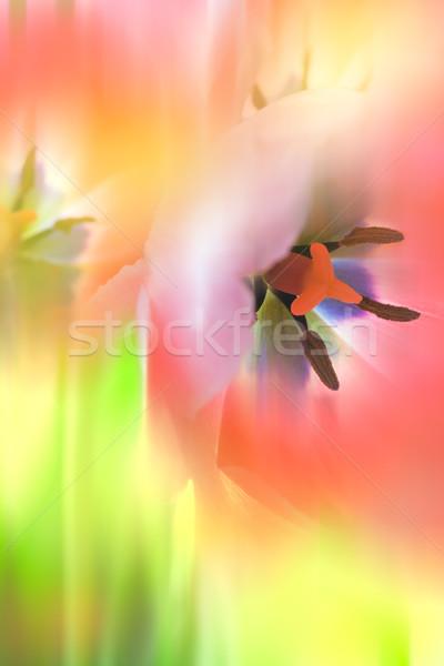 нежный аннотация цветы красочный макроса выстрел Сток-фото © Taiga