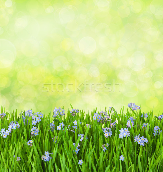 blue flowers  into green grass with water drops on defocused bac Stock photo © Taiga