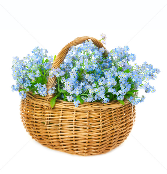Bouquet of blue spring flowers in basket on white background Stock photo © Taiga