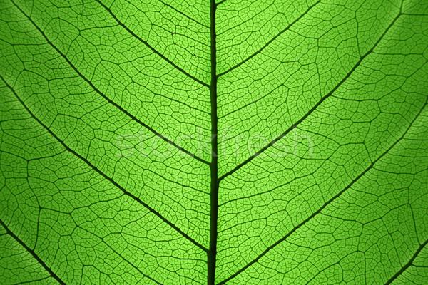 Stockfoto: Groen · blad · cel · structuur · natuurlijke · textuur · macro