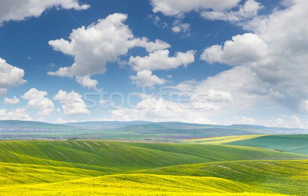 Landschap Geel groene velden heuvels blauwe hemel Stockfoto © Taiga