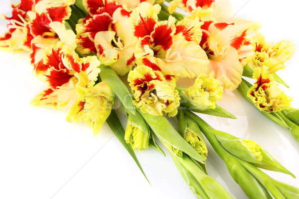 Bright yellow and red gladiolus isolated \ horizontal Stock photo © Taiga