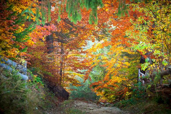 Asombroso vibrante otono caída hojas colores Foto stock © Taiga