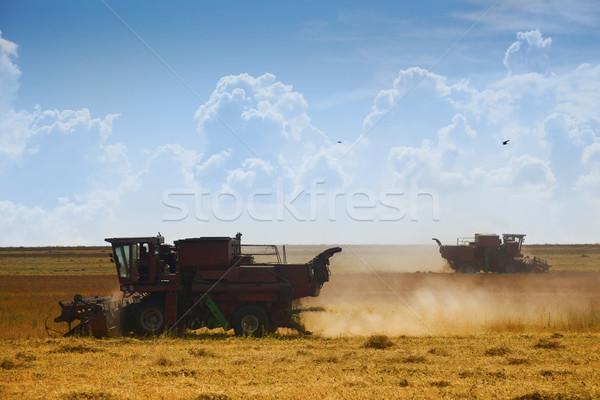 Récolte temps travail domaine ciel alimentaire Photo stock © Taiga