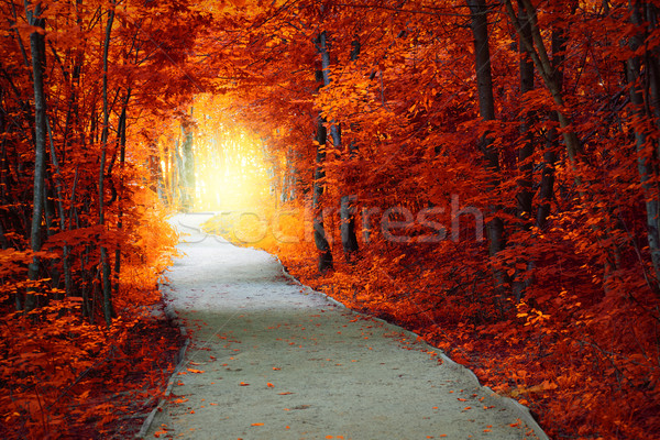 Fantastic Autumn forest with path and magical light Stock photo © Taiga