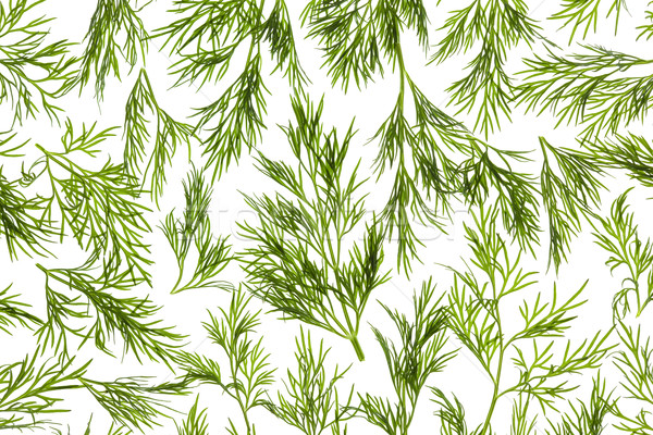 Fresh Dill close-up background / back-lit Stock photo © Taiga