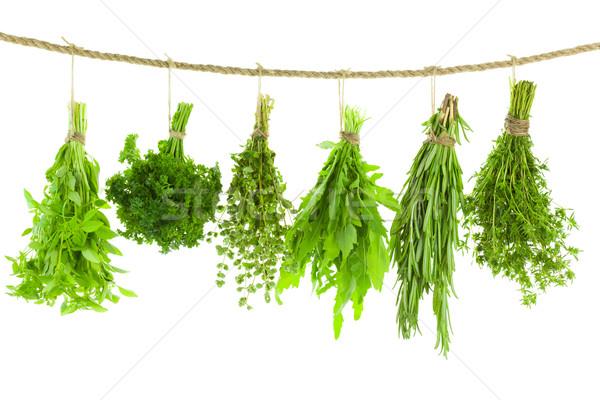 Foto stock: Conjunto · tempero · ervas · enforcamento · isolado · branco
