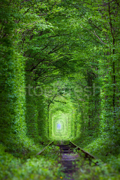 Wonder of Nature - Real Tunnel of Love, green trees Stock photo © Taiga