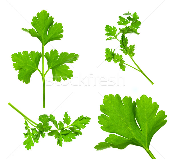Collection of Parsley Twigs / Macro and SuperMacro / XXXL size Stock photo © Taiga