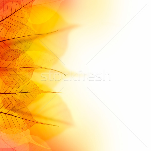 Design Border of  Autumn color dry Leaves  on white background Stock photo © Taiga