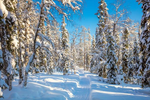 Tél napos időjárás erdő hó út Stock fotó © Taiga