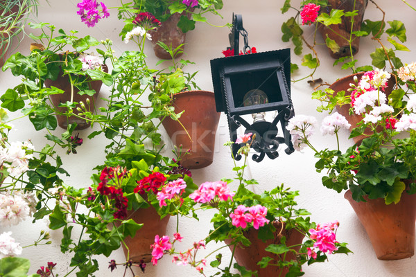 Flowerpots and red flower on a white wall with vintage lantern.  Stock photo © Taiga