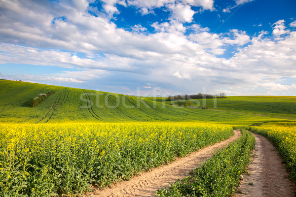 Colorido amarillo floración campos suelo carretera Foto stock © Taiga