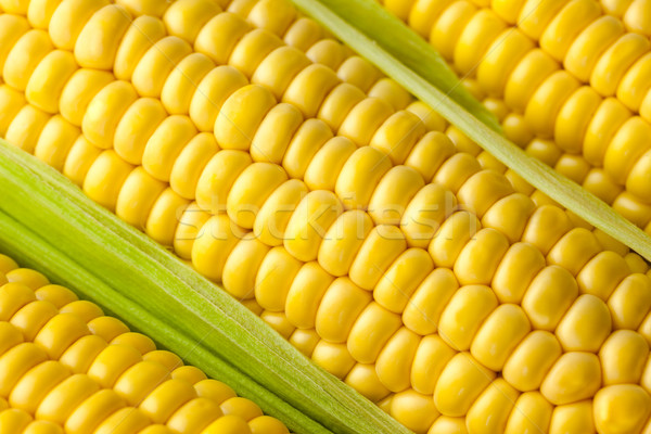 Grains of ripe Corn /  Macro  Stock photo © Taiga