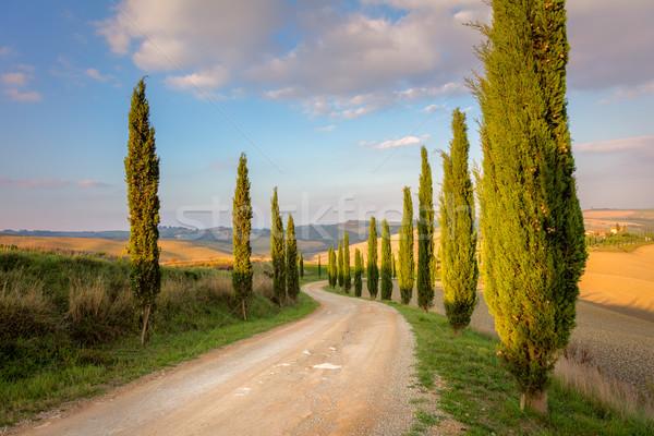 Ağaçlar zemin yol sabah gökyüzü Toskana Stok fotoğraf © Taiga