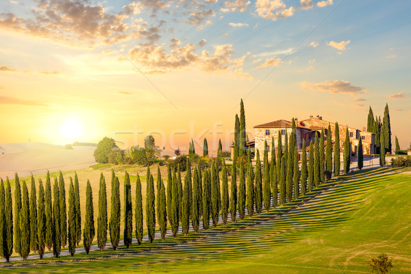 Zdjęcia stock: Toskania · zachód · słońca · drogowego · drzew · domu