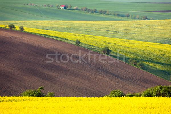 Idylliczny kolorowy pola krajobraz wzgórza Zdjęcia stock © Taiga