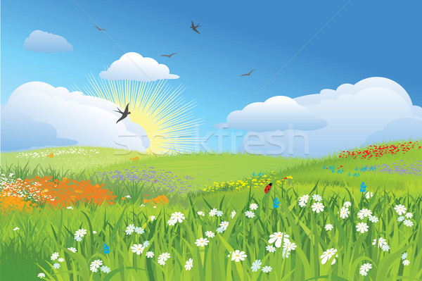 Colorfull meadow / flower and grass / vector Stock photo © Taiga