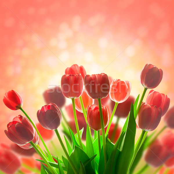 Fantastic Tulips holiday background with  magic light Stock photo © Taiga